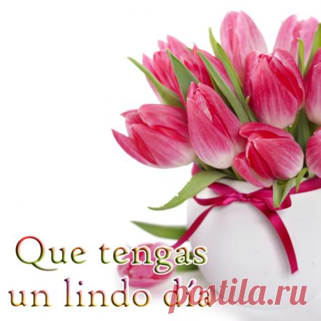 tulipanes de colores - Buscar con Google