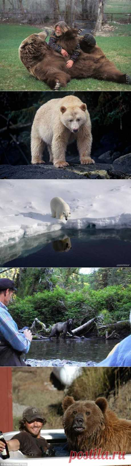 » 10 фактов о медведях Это интересно!