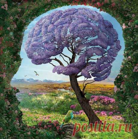 Нейролингвист о загадках человеческого мозга и как этим манипулировать