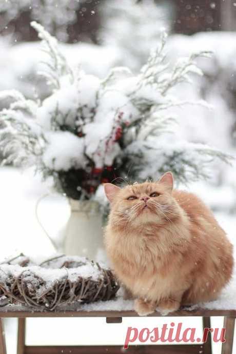 Коту нипочём холода, внутри кота теплота, мурлота и милота  🐾