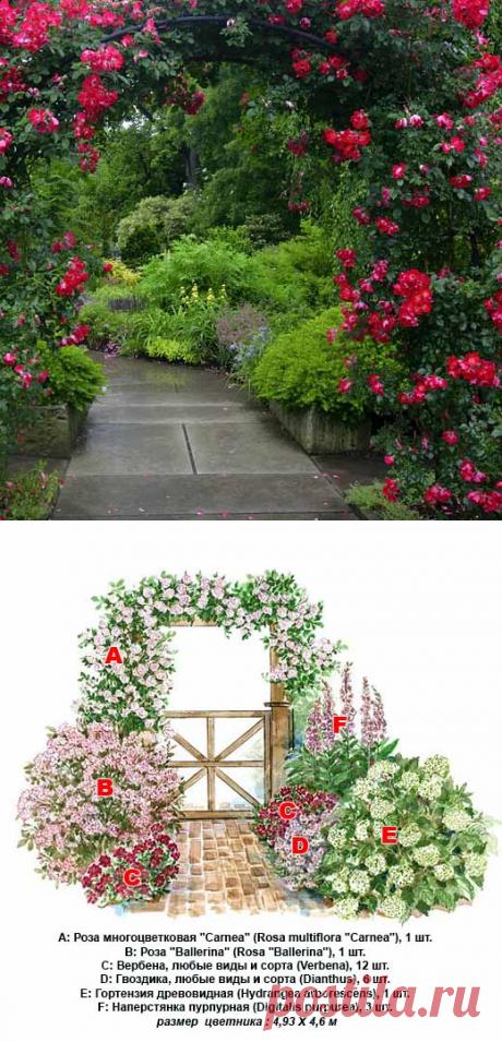 Плетистая роза в ландшафтном дизайне — секреты посадки и ухода в фото