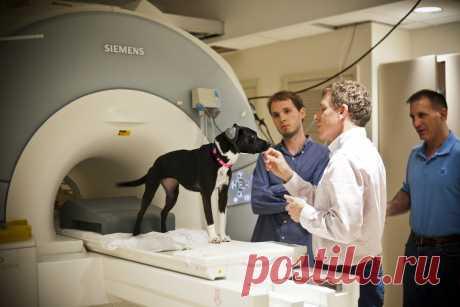 ¡Las investigaciones han demostrado que los perros comprenden realmente las palabras humanas Entre las personas por sus amigos cuadrúpedos ahora aún más general!