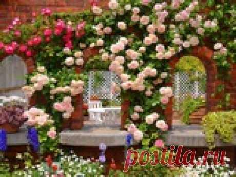 Сажаем розы осенью – инструкция для новичков Создать шикарный розарий – мечта многих дачников. Предлагаем пошаговое описание посадки роз. Подробности о времени работы и правильных действиях с саженцем.