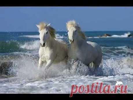 ▶ Лошади - YouTube