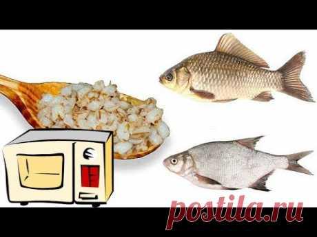 Перловка на рыбалку с микроволновки для ловли карася, плотви и леща