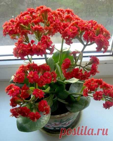 Самые красивые комнатные цветы Комнатные цветы фото самых красивых с описанием уходаОбзор самых красивых комнатных цветовСамые необычные комнатные растенияКомнатные тенелюбивые цветы и растения - названия и уход за нимиОбзор самых ...