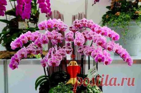 34 лучших вида комнатных орхидей с названиями Виды комнатных орхидей. Какого цвета бывают. Орхидеи с мелкими цветами. Разновидности орхидей. Сорта. Бордовая, фиолетовая, сиреневая, оранжевая и другие.