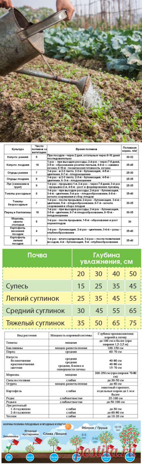 How many water it is necessary for each vegetable - Sadovodka