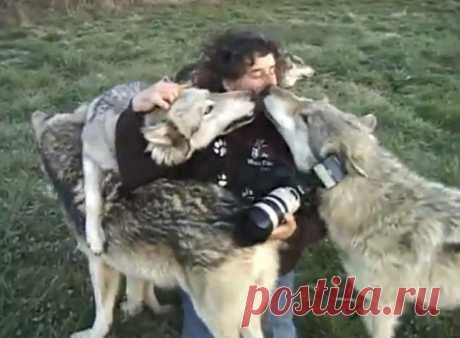 Супер сюжет! Встречайте Монти Слоун. Он просто любит волков и они его тоже.