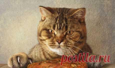 Очень простые и дешёвые рецепты блюд для кошек | Мой обожаемый кот | Яндекс Дзен