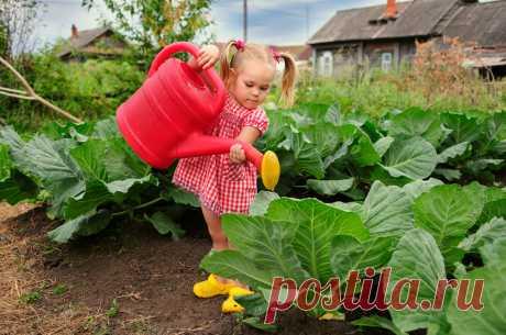Шпаргалка для дачников на лето - чем и когда удобрять овощи » Женский Мир
