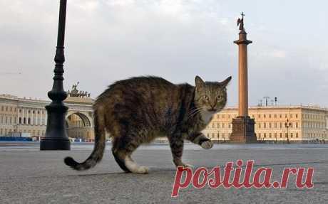 Коты Эрмитажа » Nibler.ru - мой маленький уютный уголок