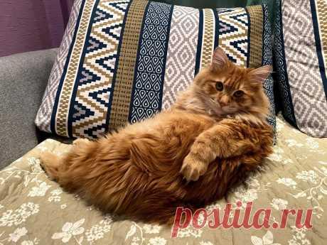 5 признаков того, что вашему коту скучно   Рекомендательная система Пульс Mail.ru
