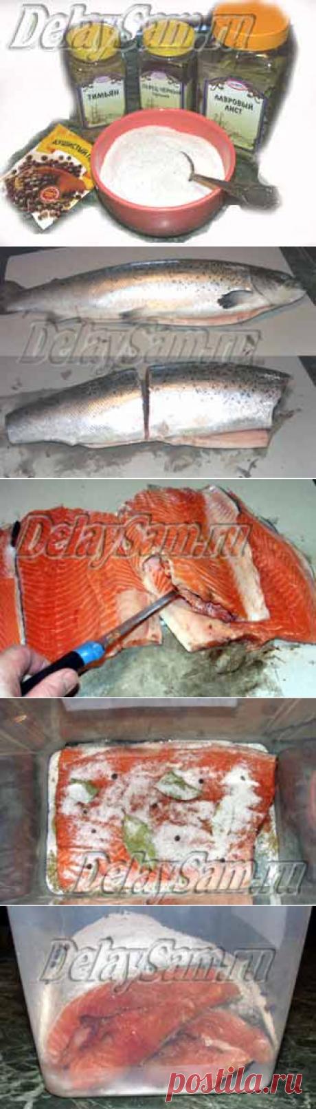 Как засолить семгу, форель, нерку, кижуча, горбушу, кету. Засолка красной рыбы дома