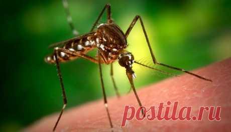 Лечение укусов насекомых народными средствами — СОВЕТ !!!