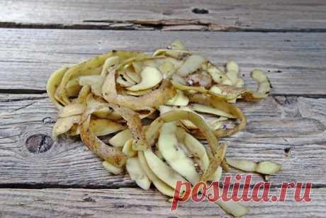 Зачем класть картошку и очистки под смородину | Почва и плодородие (Огород.ru)