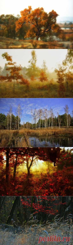 Осеннее утро в грибном лесу