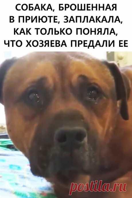 Собака, брошенная в приюте, заплакала, как только поняла, что хозяева предали ее