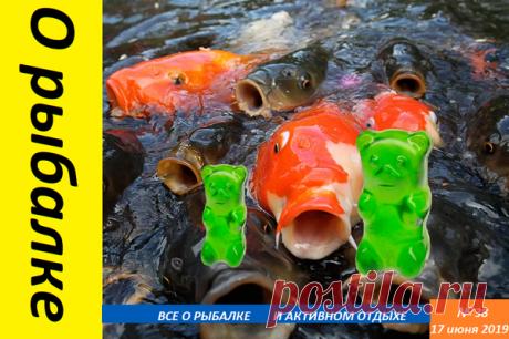 обловишь всех: Ловля рыбы на мармеладных мишек | О рыбалке 🎣 | Яндекс Дзен