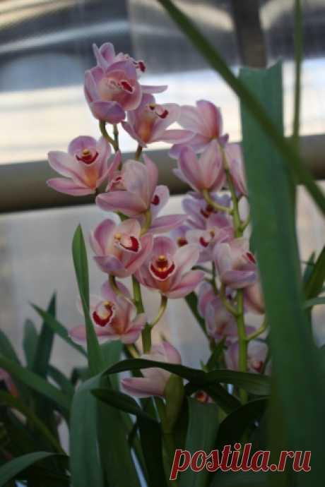 Советы по покупке орхидей - Садоводка