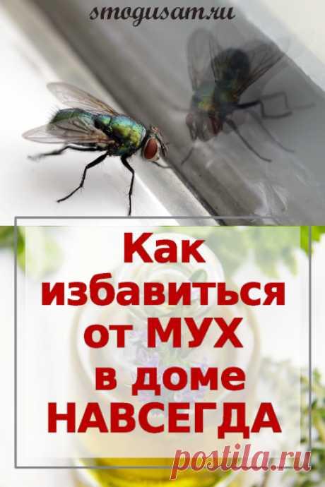Как избавиться от мух в доме народными способами навсегда