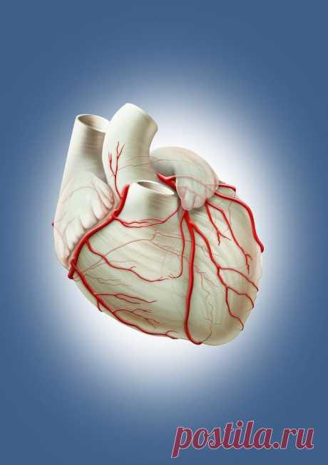 Витамины и минералы, которые нужны для здоровья сердца и сосудов / Будьте здоровы