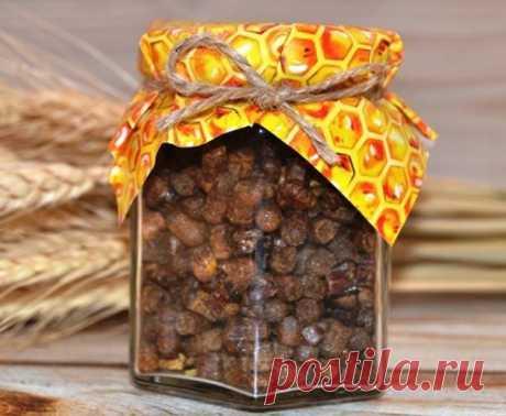 Что такое перга и как ею лечиться? ⠀ Мед пчелы производят из нектара, а пергу - из пыльцы цветочных растений. Пчелы приносят ее в виде двух шариков на задних лапках (ножках), поэтому такую пыльцу называют пчелиной обножкой. ⠀ Принесенную в улей пыльцу пчелы утрамбовывают в сотовые ячейки, обрабатывают ферментами, заливают медом и запечатывают. Показать полностью…