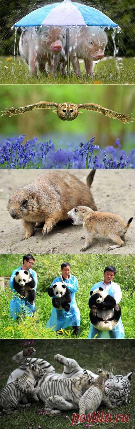 >> Животные в фотографиях | ФОТО НОВОСТИ