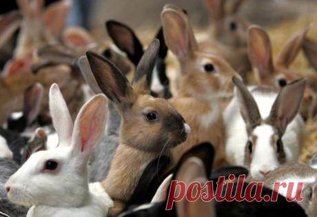 Кролики в яме | ЦВЕТАНА | Яндекс Дзен