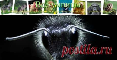 Волоски пчел чувствуют электричество   Все умницы