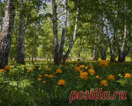 Новые фотографии природа лето.
