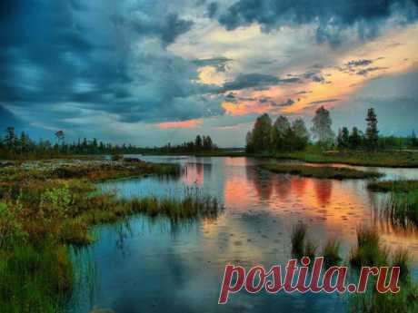 Большое Васюганское болото - природный феномен, не имеющий аналогов в мире Васюганские болота - самые большие болота в мире, расположены на территории Томской, Омской и Новосибирской областей, между крупными сибирскими реками Обью и Иртышом. Площадь болот огромна: протяженность с запада на восток - 573 км, с севера на юг - 320 км...