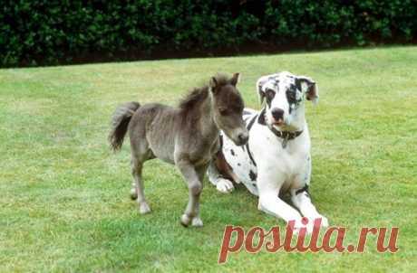 Ух ты, какие крохи! 15 самых малюсеньких лошадок, от вида которых все-все потеряют дар речи :)   Мур ТВ