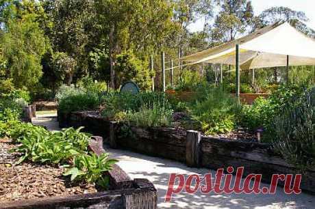 10 самых полезных лекарственных растений для вашего сада