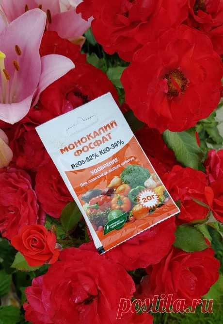 Удобрение, с которым мои розы стали цвести очень обильно (секрет от хозяйки питомника)   MyFlowersDream.ru   Яндекс Дзен