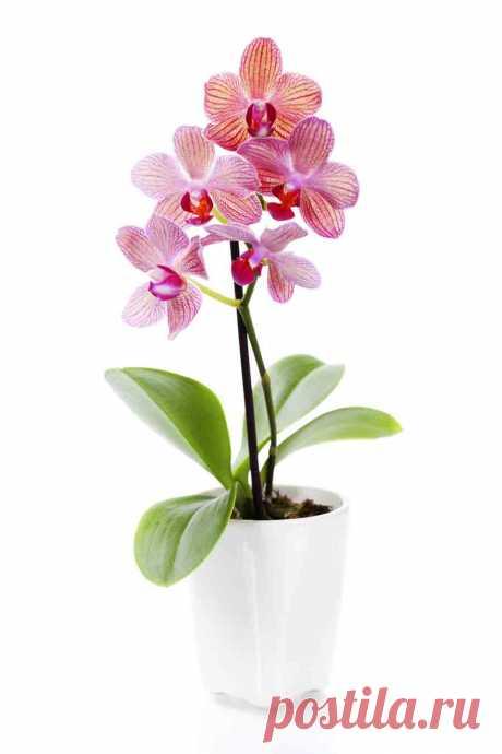 СЕКРЕТЫ удобрения орхидей. Теперь твоя орхидея будет цвести круглый год — В Курсе Жизни