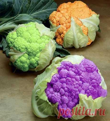 Как вырастить большой урожай цветной капусты — 6 соток