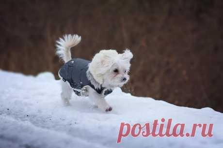 Как сшить одежду для собаки: выкройка, фото лучших моделей. Одежда для собак своими руками