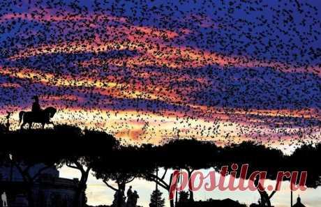 Большая стая скворцов пролетает над Алтарем Отечества в Риме