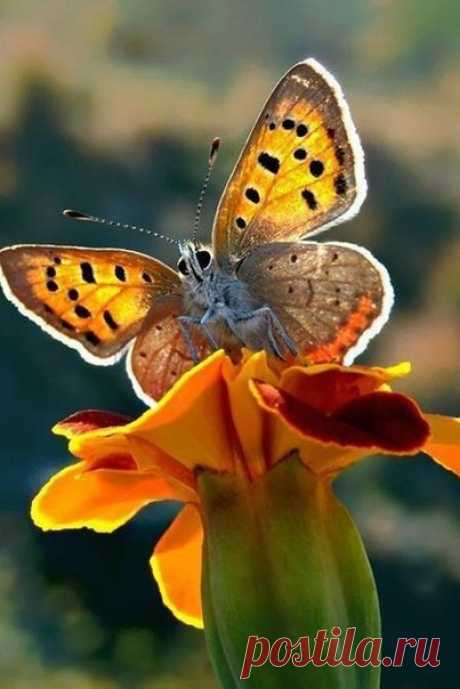 """Мы сами ответственны за """"погоду в доме"""" под названием душа. Стоит впустить туда тоску и хандру, как они вмиг развесят по углам паутину депрессии, в которой запутаются и погибнут бабочки счастья, радости и хорошего настроения...©"""