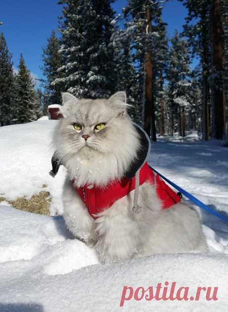 Гэндальф — кот-путешественник из приюта, чьи каникулы гораздо круче твоих