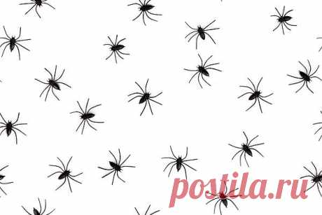 Spiders  Free Stock Photo HD - Public Domain Pictures
