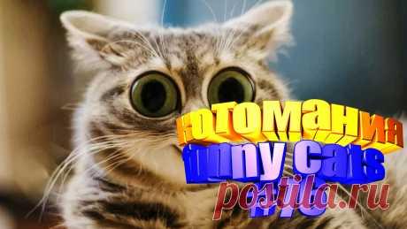 Вам нравится смотреть приколы про кошек? Тогда мы уверены, Вам понравится наше видео 😍. На котомании Вас ждут: смешные видео котов, видео с котом, смешные кошки, смешные видео кошек, смешные кошки и, видео смешное с кошками, смешная кошка видео, про кошку смешное видео, кошки и приколы, смешное видео про, видео приколы кошка, приколы видео смотреть бесплатно. #смешныекоты, #смешныекотики, #смешныекотята, #кошкисмешные, #юморприколы, #funny_cats, #забавныекотики, #kittycat, #kittylove.