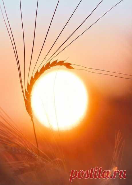 Заходящее солнце хлопает длинными ресницами на снимке от Елены Белозоровой: nat-geo.ru/community/user/18006/ Фотография участвует в нашем главном конкурсе «Дикая природа России 2019» в номинации «Совершенство от природы». Присоединяйтесь: bit.ly/NGdpr2019