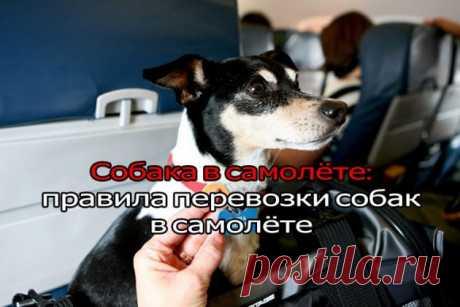 Правила перевозки собак в самолете! | ЖЕНСКИЙ МИР