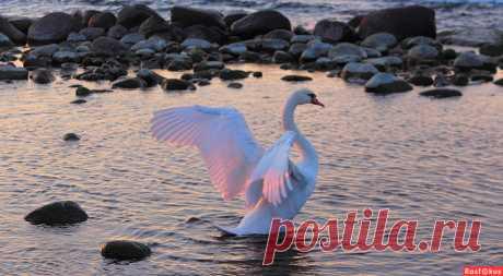 Фото: На закате среди камней. Пейзажный фотограф АвгустинаR. Фото животных - Фотосайт Расфокус.ру