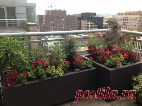 На все готовое: Как получить цветущий балкон за два дня