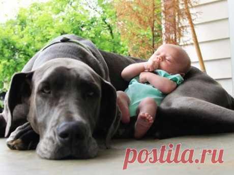 Собаки и дети, лучшие друзья. Dogs and Baby, the best video. - YouTube