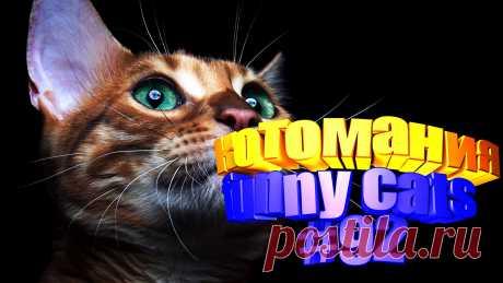 Вам нравится смотреть приколы про кошек? Тогда мы уверены, Вам понравится наше видео 😍. Также на котомании Вас ждут: видео кот,видео кота,видео коте,видео котов,видео кошек,видео кошка,видео кошки,видео о котах, видео о кошках, видео прикол, видео про, видео с котиками, видео с кошками, видео смешная кошка, видео смешное о кошках, видео смешные, видео эти смешные кошки, говорящие коты, для котов видео, для кошек, и кошки, кот видео, кот смешное видео, котик, котики мило, кото приколы