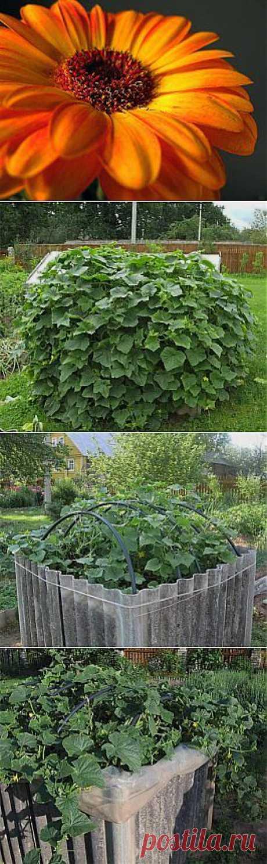 Теплый домик для выращивания огурцов | Самоцветик